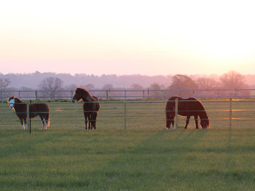 beautiful_horses_standing_and_running_about_in_a_field